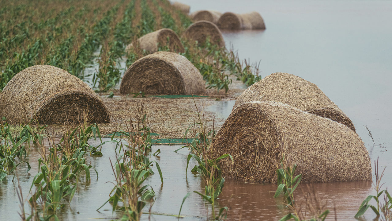 Hay bales floating in flooded field.